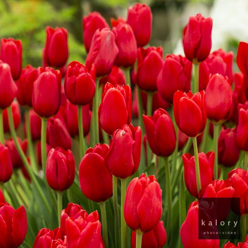 London chelsea flower show