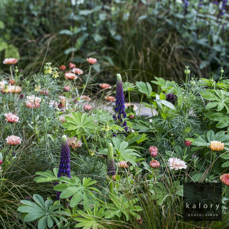 chelsea flower show RHS photo reportage